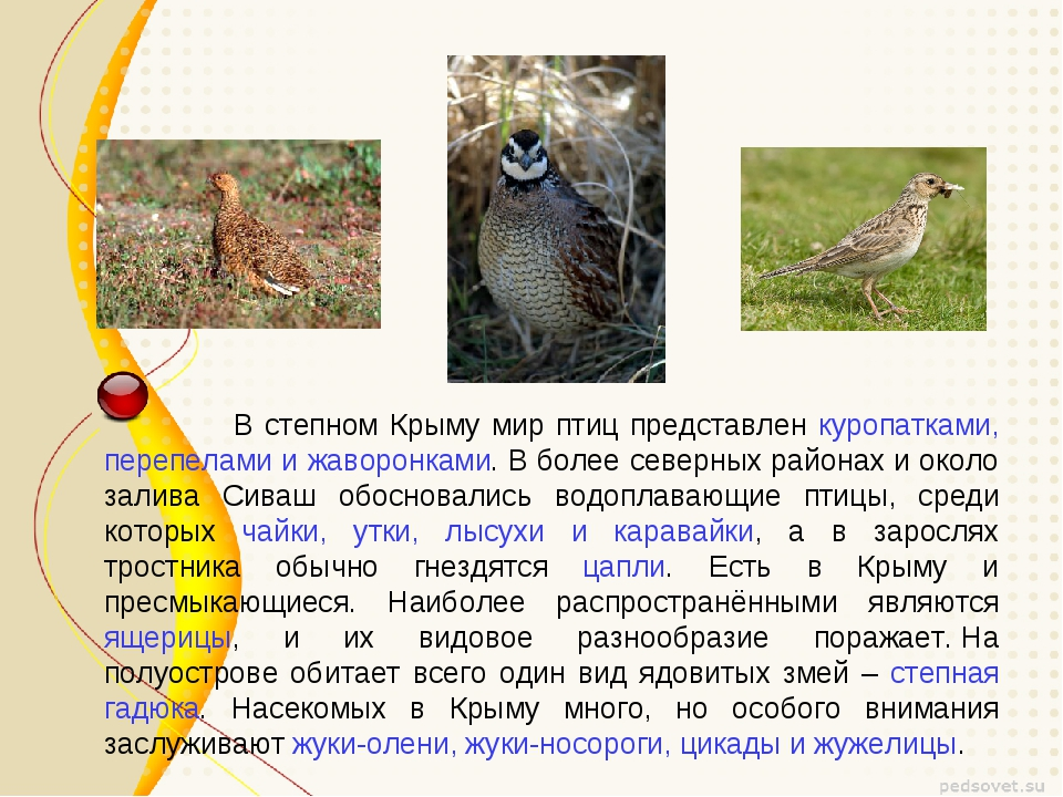 В степном Крыму мир птиц представлен куропатками, перепелами и жаворонками....