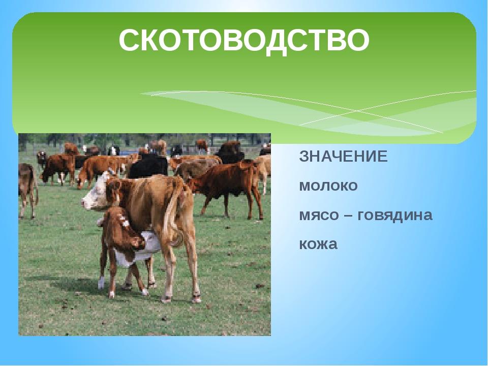 СКОТОВОДСТВО Рыжий молокозавод День жует и ночь жует: Ведь траву не так легко...