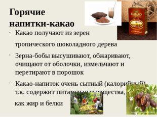 Горячие напитки-какао Какао получают из зерен тропического шоколадного дерева