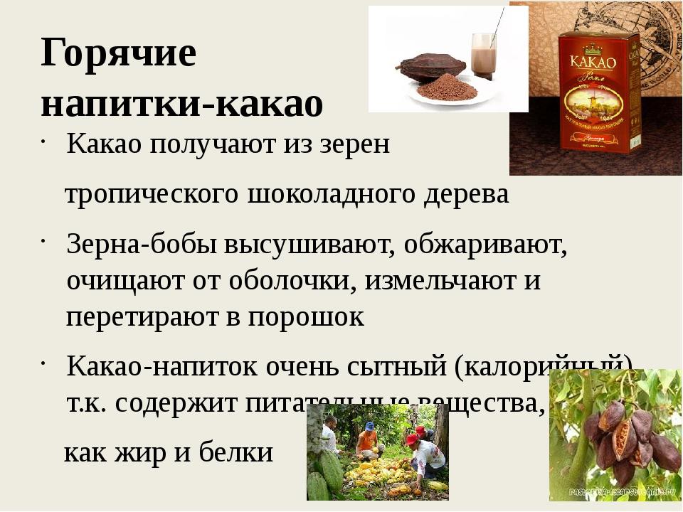 Горячие напитки-какао Какао получают из зерен тропического шоколадного дерева...