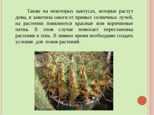 Также на некоторых кактусах, которые растут дома, я заметила ожогиот прямых
