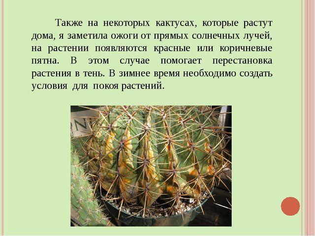 Также на некоторых кактусах, которые растут дома, я заметила ожогиот прямых...