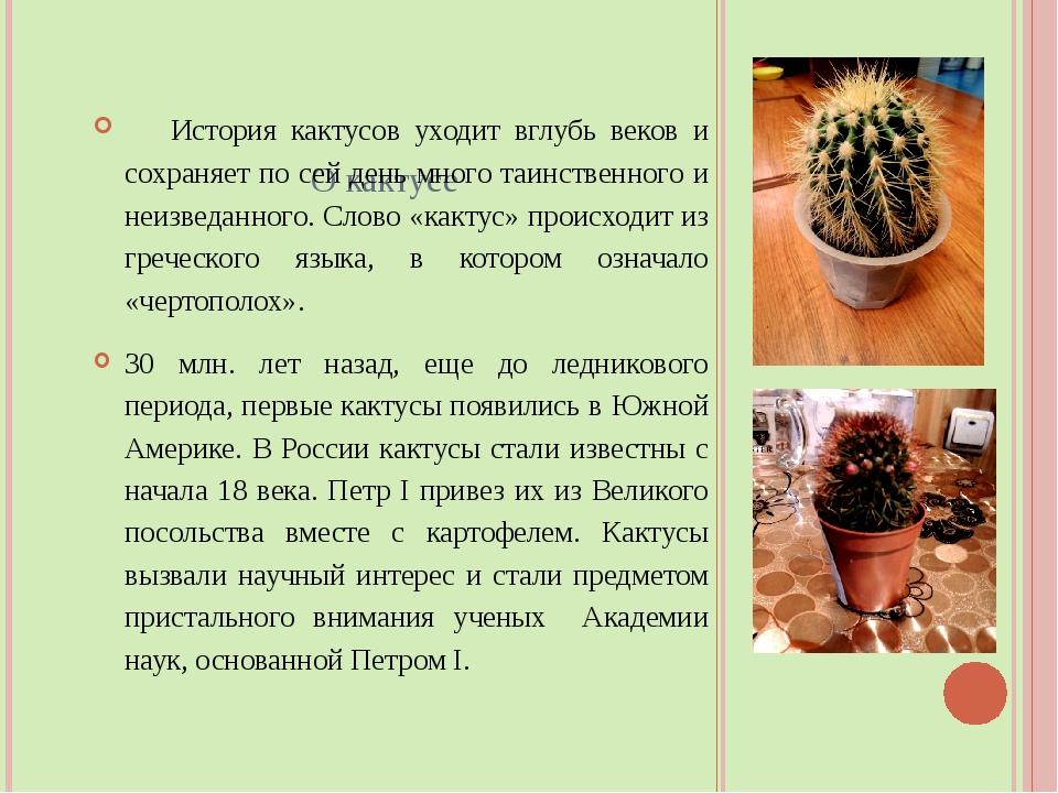 О кактусе История кактусов уходит вглубь веков и сохраняет по сей день много...