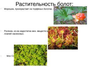 Растительность болот: Морошка, произрастает на торфяных болотах. Росянка, из-