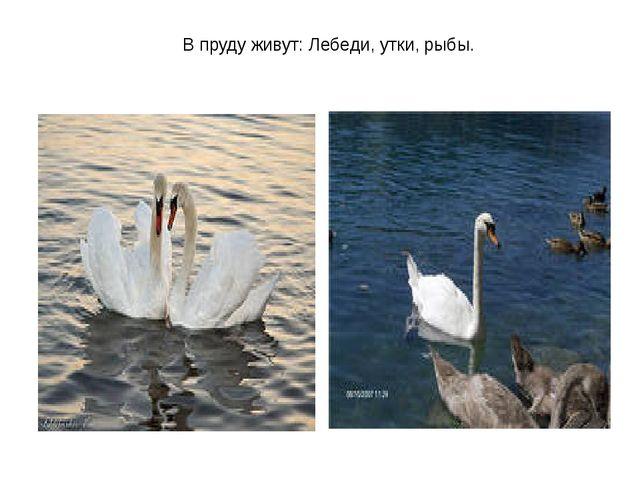 В пруду живут: Лебеди, утки, рыбы.