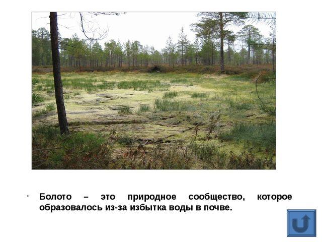 Болото – это природное сообщество, которое образовалось из-за избытка воды в...