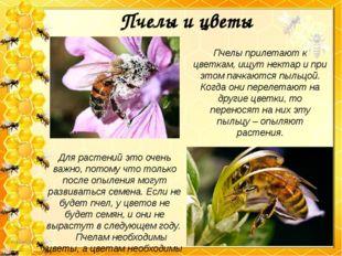 Пчелы и цветы Для растений это очень важно, потому что только после опыления