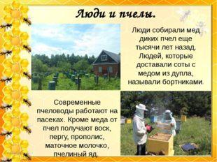 Люди и пчелы. Люди собирали мед диких пчел еще тысячи лет назад. Людей, котор