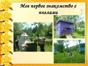 Мое первое знакомство с пчелами