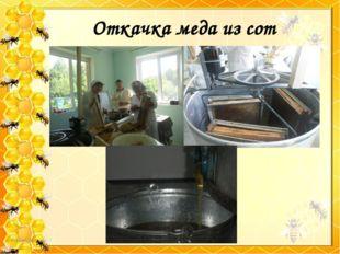 Откачка меда из сот