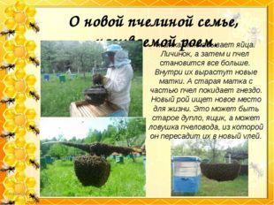 О новой пчелиной семье, называемой роем. Матка откладывает яйца. Личинок, а з