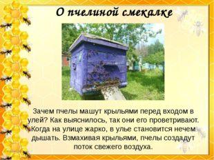 Зачем пчелы машут крыльями перед входом в улей? Как выяснилось, так они его п