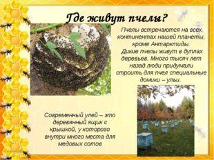 Где живут пчелы? Пчелы встречаются на всех континентах нашей планеты, кроме А