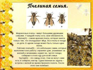 Пчелиная семья. Медоносные пчелы –живут большими дружными семьями. У каждой п
