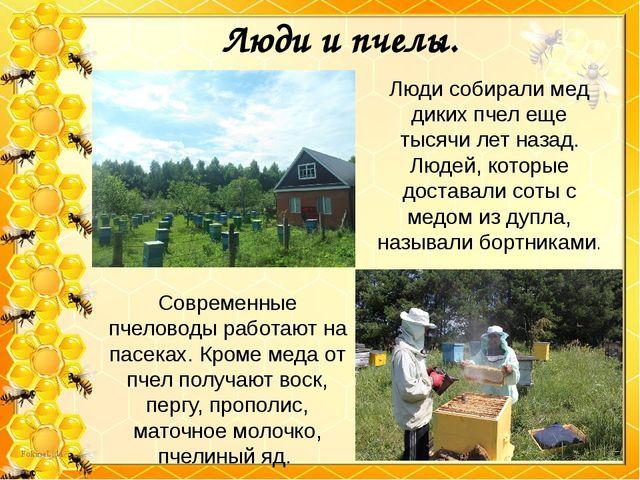 Люди и пчелы. Люди собирали мед диких пчел еще тысячи лет назад. Людей, котор...