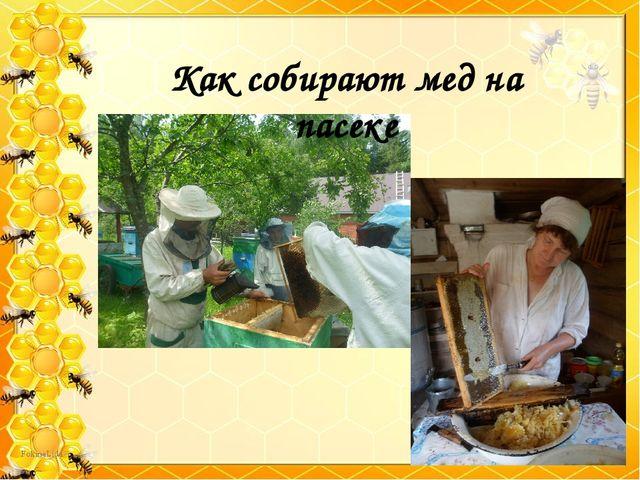 Как собирают мед на пасеке