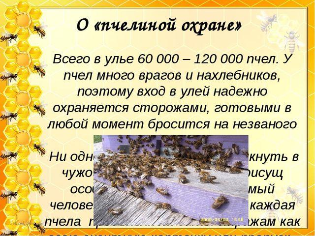 Всего в улье 60 000 – 120 000 пчел. У пчел много врагов и нахлебников, поэто...