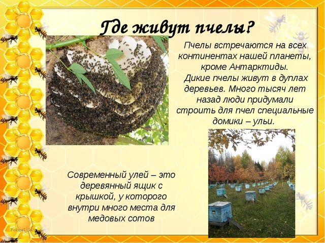 Где живут пчелы? Пчелы встречаются на всех континентах нашей планеты, кроме А...