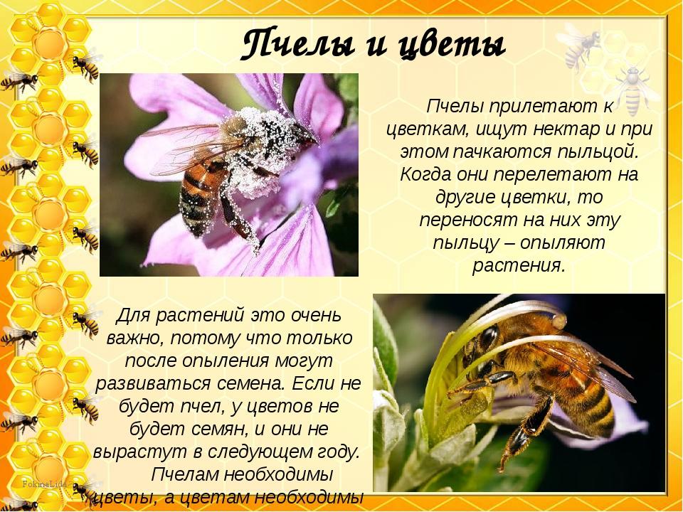 Пчелы и цветы Для растений это очень важно, потому что только после опыления...