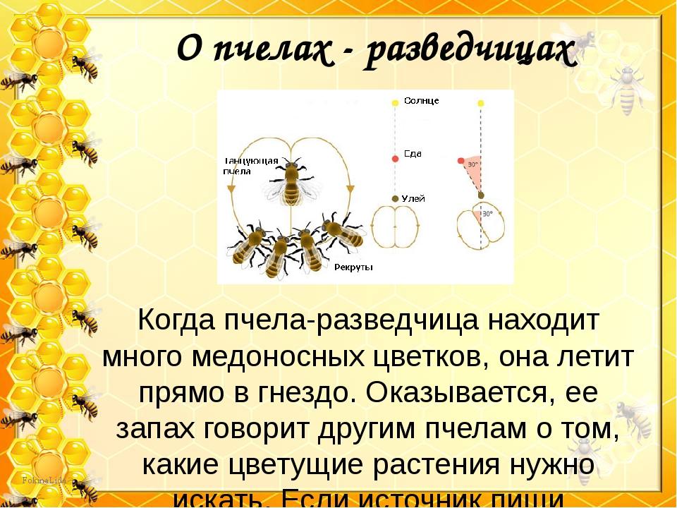 О пчелах - разведчицах Когда пчела-разведчица находит много медоносных цветко...