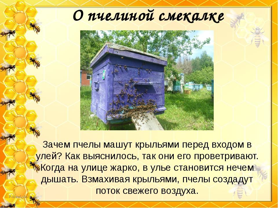 Зачем пчелы машут крыльями перед входом в улей? Как выяснилось, так они его п...