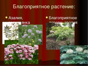 Благоприятное растение: Азалия, валерьянка (валериана) Благоприятное дерево: