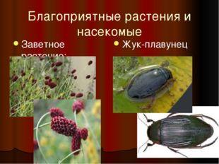 Благоприятные растения и насекомые Заветное растение: кровохлёбка Жук-плавунец