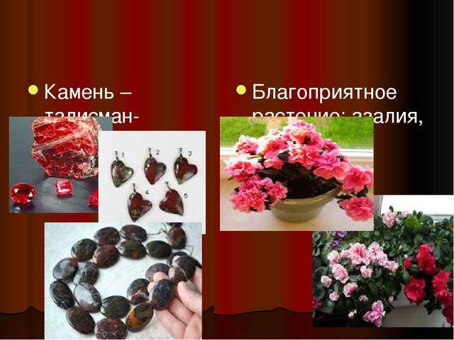 Камень – талисман- кровавик Благоприятное растение: азалия, валерьянка (вале...