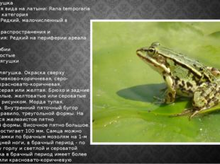 Травяная лягушка Наименования вида на латыни: Rana temporaria Категория: III