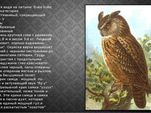 Филин Наименования вида на латыни: Bubo bubo Категория: II категория Статус в