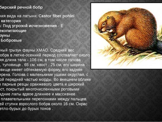 Западносибирский речной бобр  Наименования в...