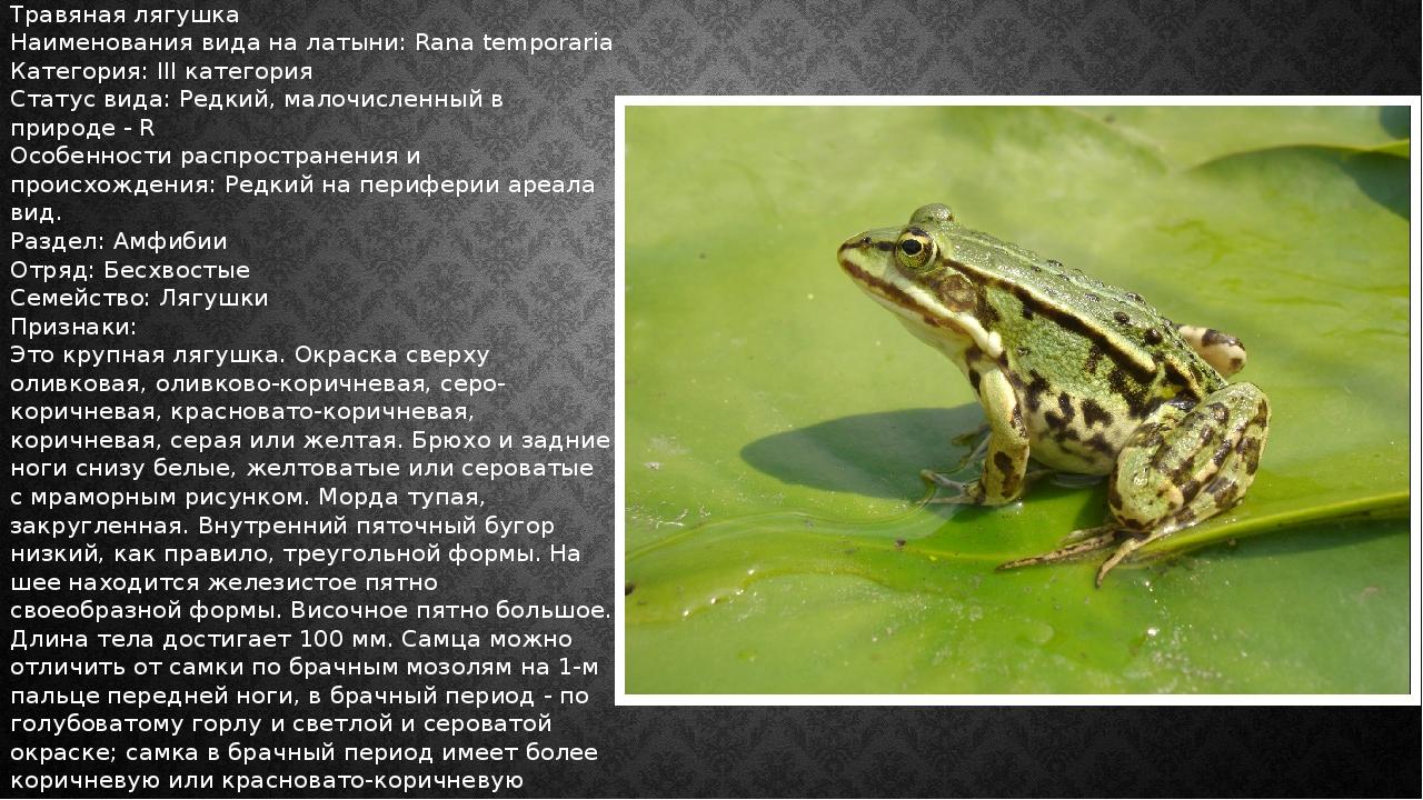Травяная лягушка Наименования вида на латыни: Rana temporaria Категория: III...