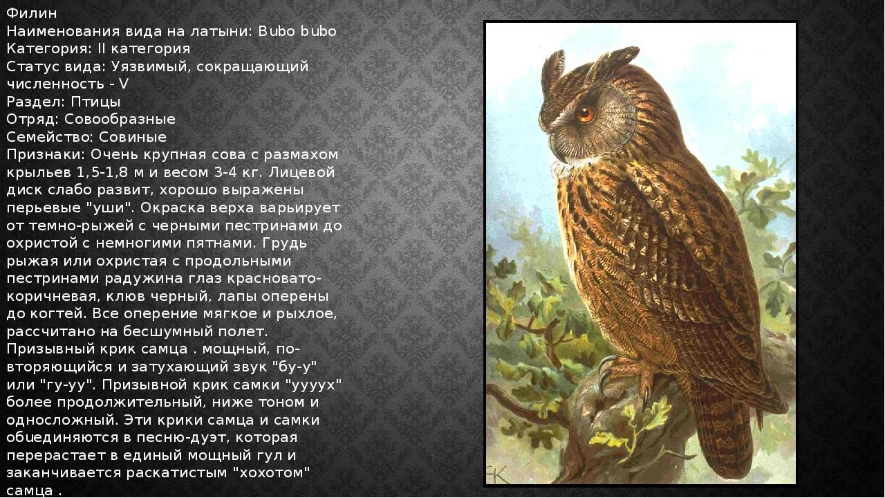 Филин Наименования вида на латыни: Bubo bubo Категория: II категория Статус в...