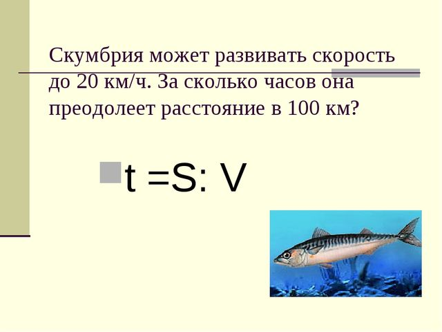 Скумбрия может развивать скорость до 20 км/ч. За сколько часов она преодолеет...