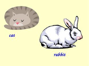 cat rabbit