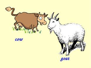 cow goat