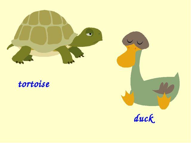 tortoise duck