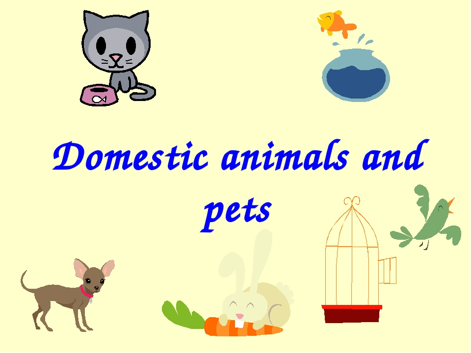 Domestic animals and pets