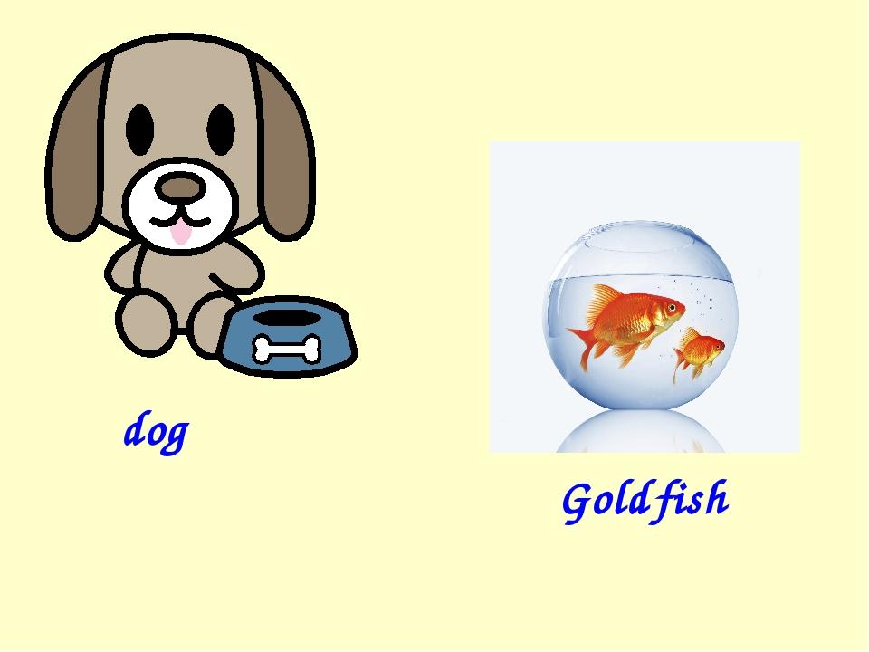 dog Gold fish