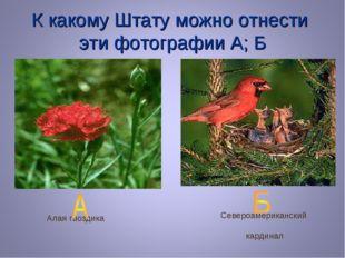 К какому Штату можно отнести эти фотографии А; Б Алая гвоздика Североамерикан