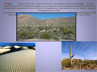 Сонора (англ.Sonoran Desert; исп.Desierto de Sonora; также известна как пус