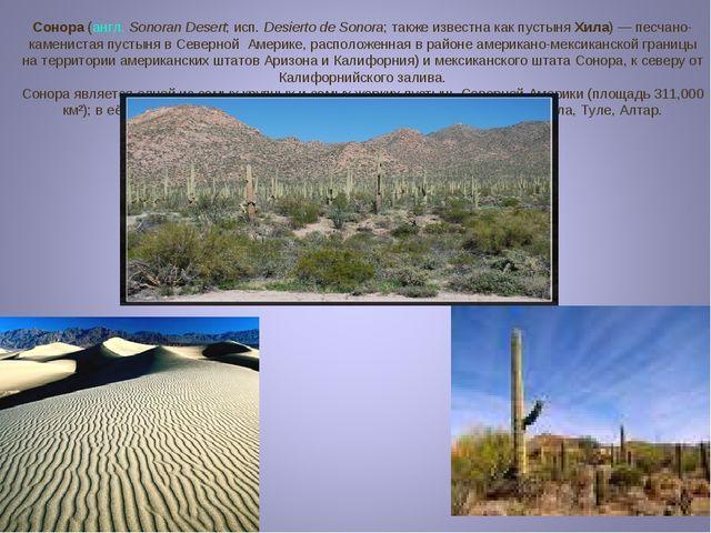 Сонора (англ.Sonoran Desert; исп.Desierto de Sonora; также известна как пус...