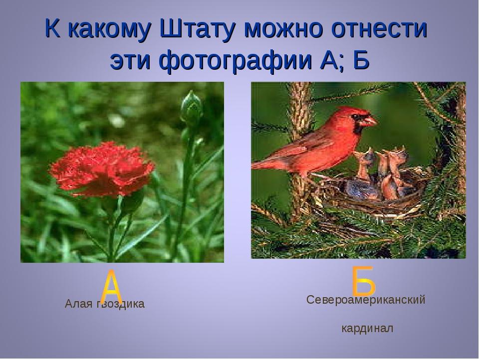 К какому Штату можно отнести эти фотографии А; Б Алая гвоздика Североамерикан...