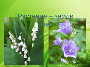 """""""Растение – земли украшение"""""""