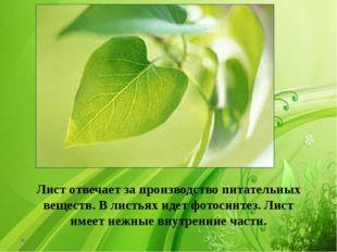 Лист отвечает за производство питательных веществ. В листьях идет фотосинтез
