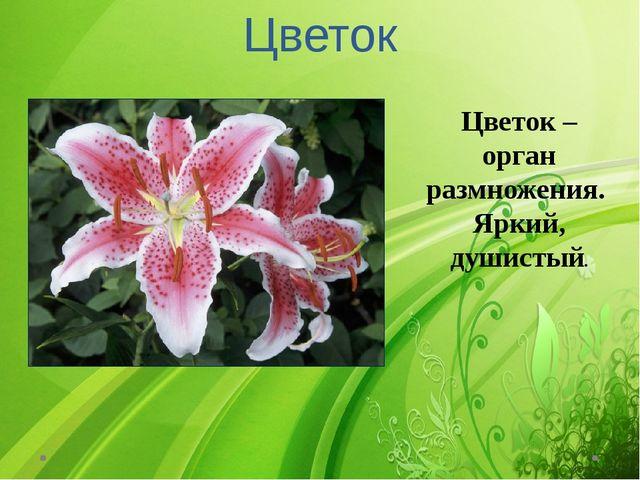 Цветок Цветок – орган размножения. Яркий, душистый.