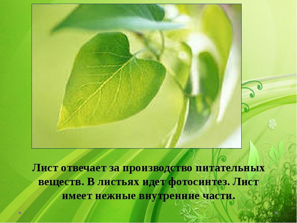 Лист отвечает за производство питательных веществ. В листьях идет фотосинтез...