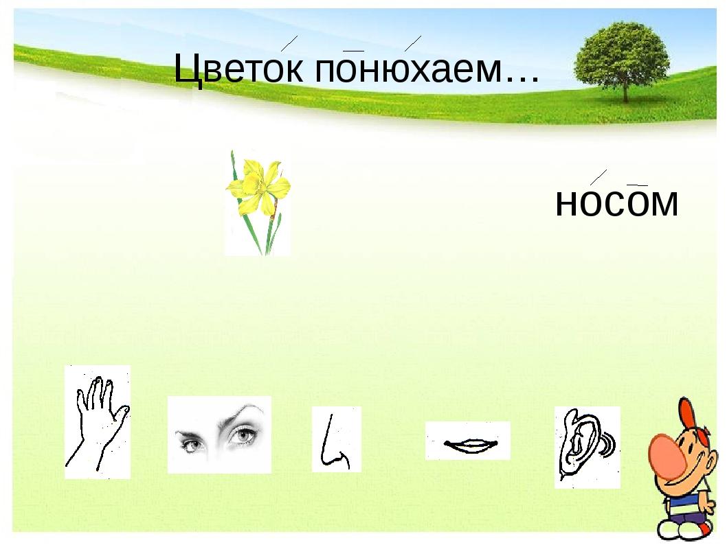 Цветок понюхаем…  носом