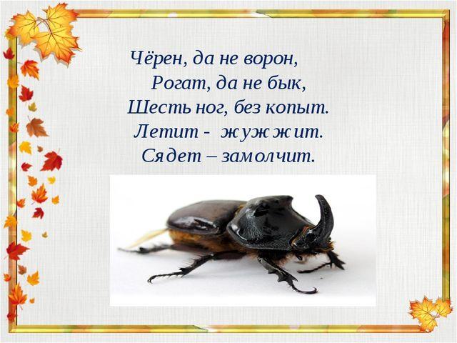 Чёрен, да не ворон, Рогат, да не бык, Шесть ног, без копыт. Летит - жужжит. С...
