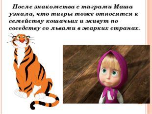 После знакомства с тиграми Маша узнала, что тигры тоже относятся к семейству